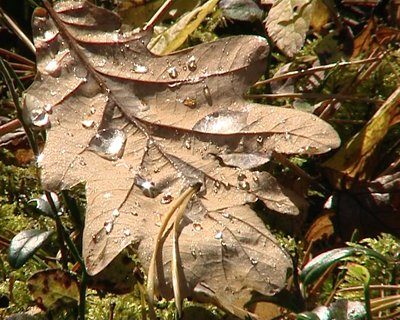 stock-footage-mossy-forest-ground-with-spines-closeup-and-oak-leaf-with-sunlight-waterdrops
